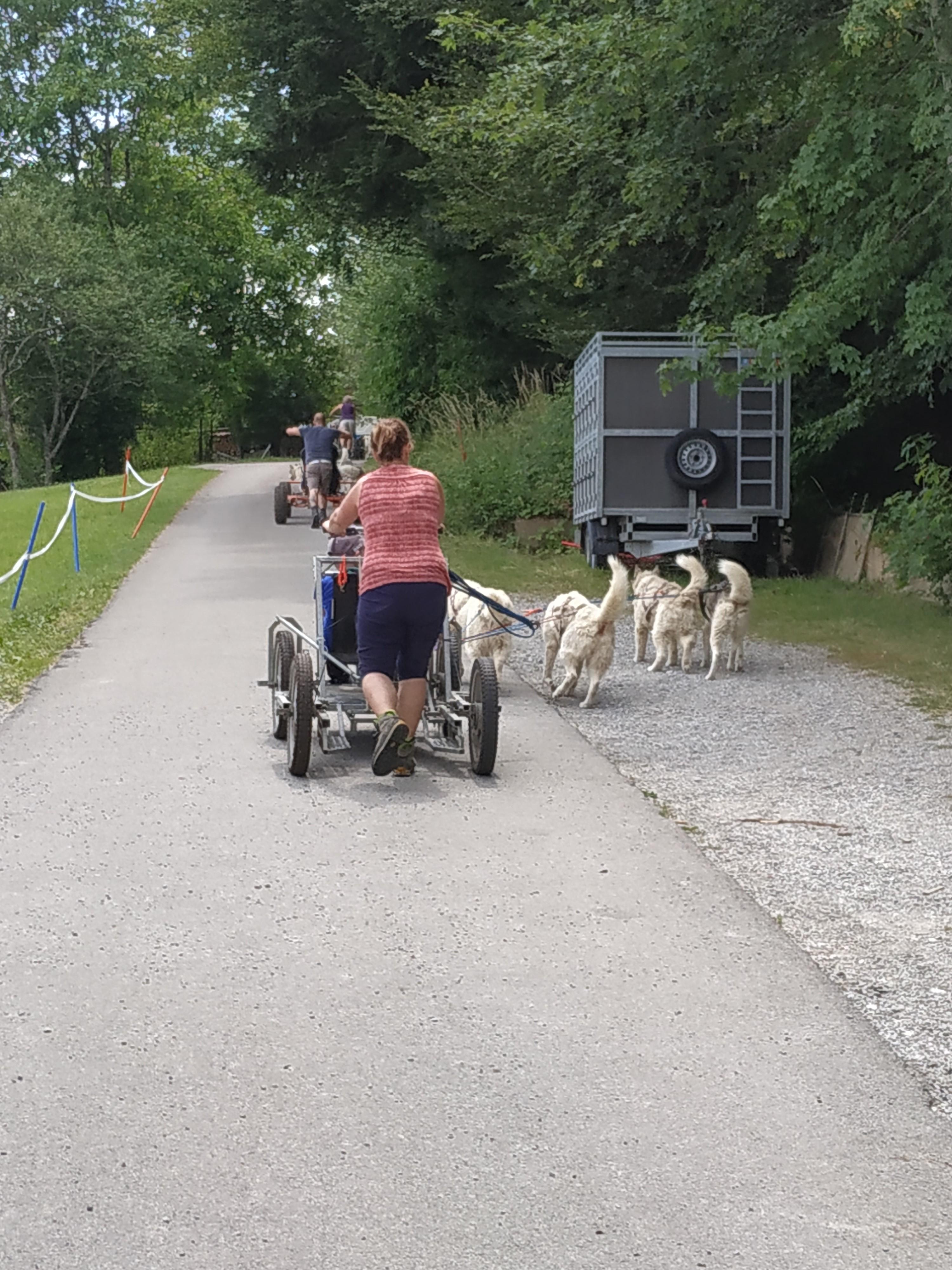 2019-07-17_l_PVM_Activite_chiens_traineaux